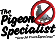 The Pigeon Specialist. Over 30 Years Experiencie Pest Control Service